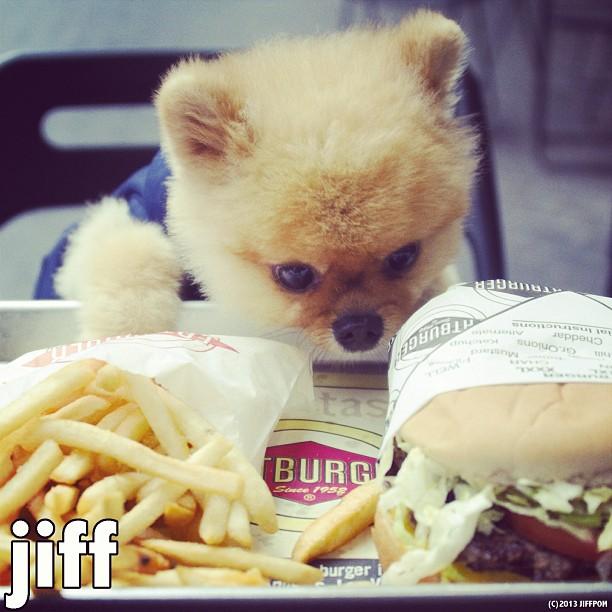 fatburger@JiffPom
